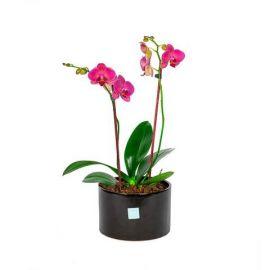 Orquídea Cerámica Negra