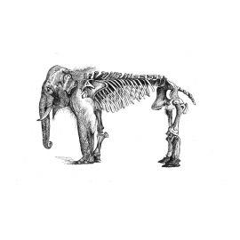 Cuadro Elefante sin marco