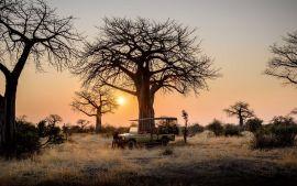Safari al amanecer en el Serengeti