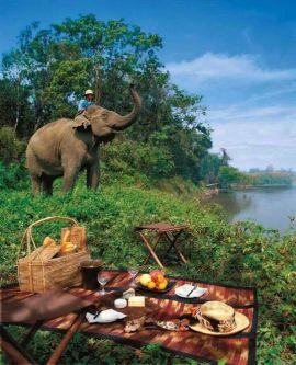 Trekking elefantes